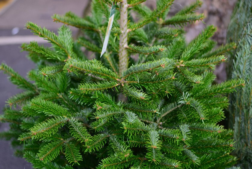 BEST_TIPS_FOR_SETTING_UP_A_CHRISTMAS_TREE1