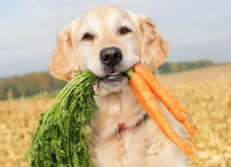 10 Ways to Keep your Dog Healthy