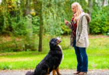 Dog Training Tips Every Owner Should Remember