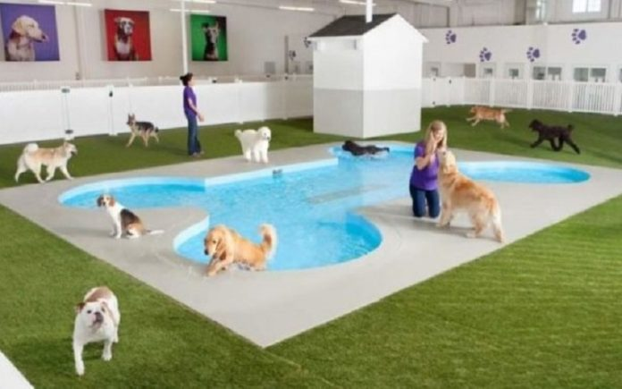 How to Choose a Pet Hotel