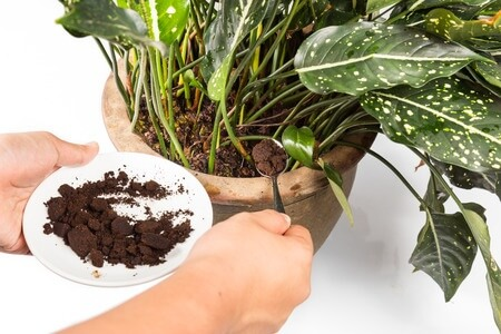 15 best uses of coffee grounds-2