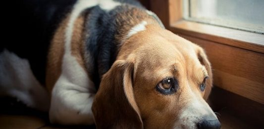 8 Tips to Cheer up Depressed Pets
