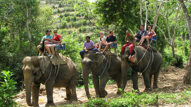 The Ultimate Travel Guide to Visit Phuket Thailand-Elephant Riding