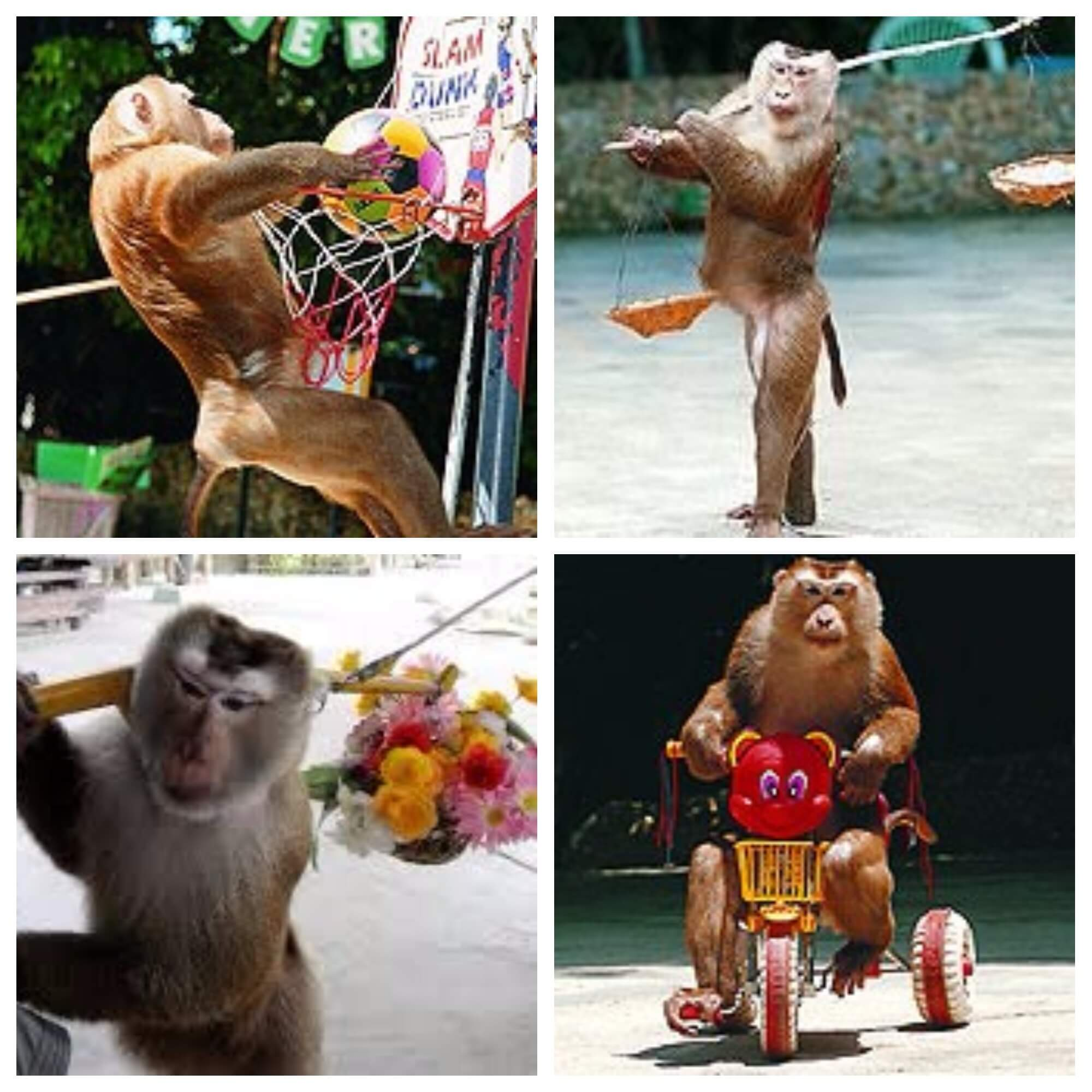 The Ultimate Travel Guide to Visit Phuket Thailand-Monkey Show