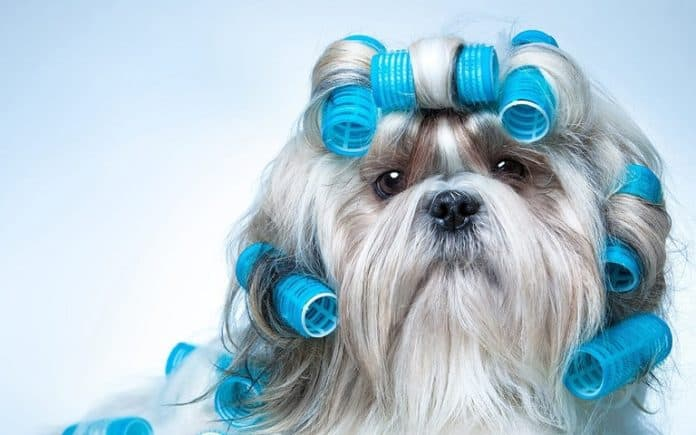 Ultimate Dog Grooming Tips – Dog Care Tips