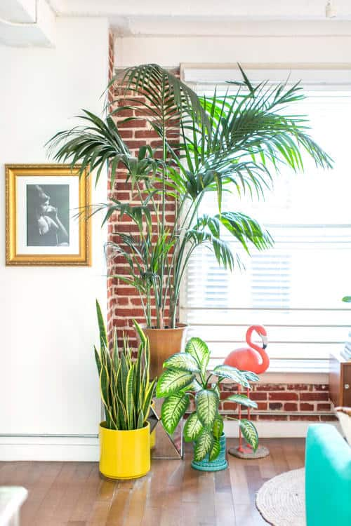 7 Great Indoor Plants to Improve your Home's Environment-2