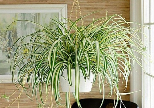 7 Great Indoor Plants to Improve your Home's Environment-7