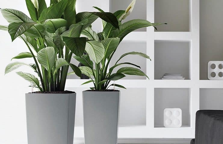 7 Great Indoor Plants to Improve your Home's Environment