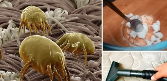 How to Get Rid of Dust Mites Lurking in Your Home