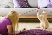 10 Amazing Cat Tips Every Cat Lover Needs to Know
