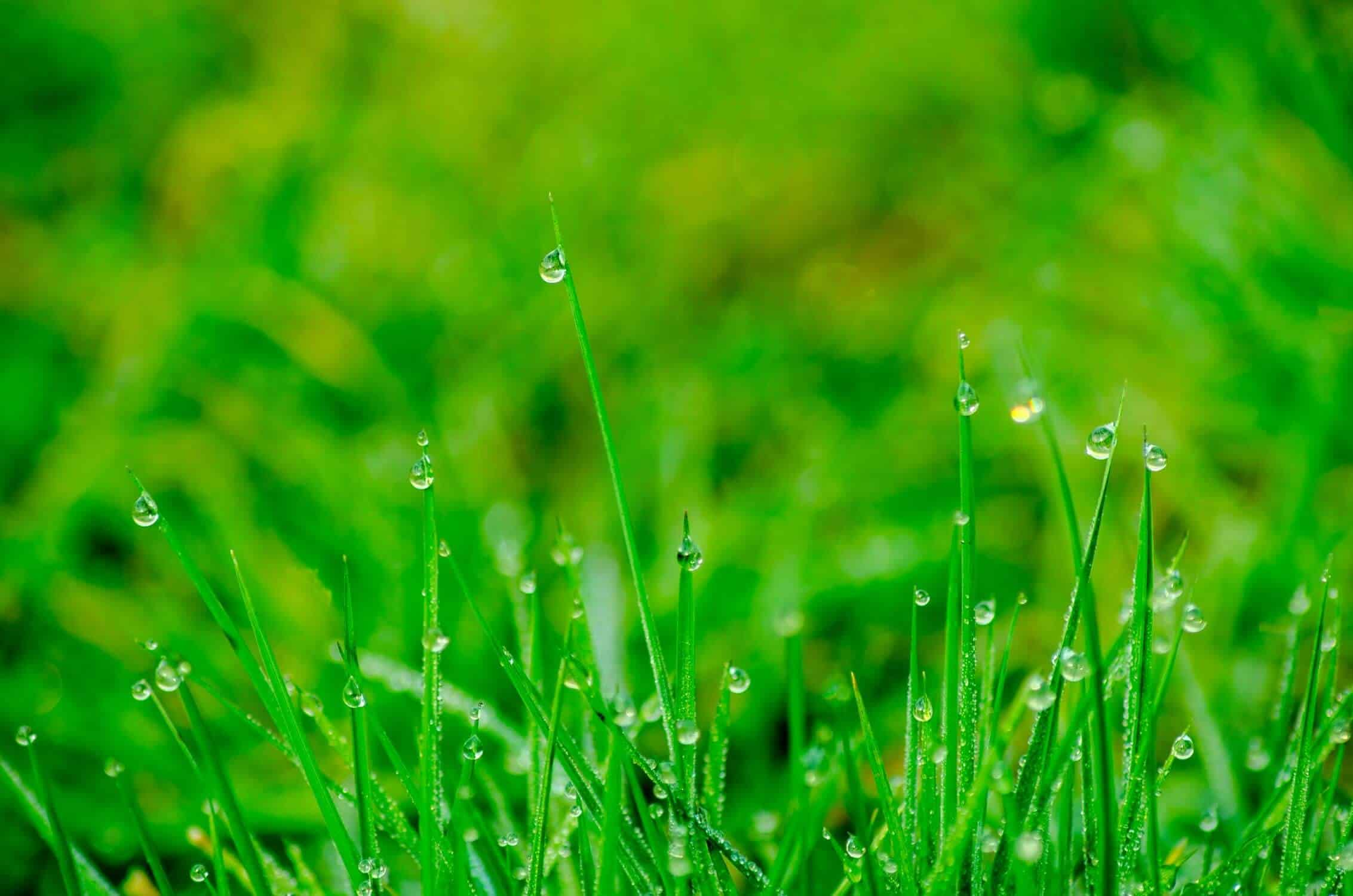 Great Lawn Care Tips for Time-Strapped Homeowners in Summer-1