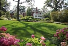 Great Lawn Care Tips for Time-Strapped Homeowners in Summer