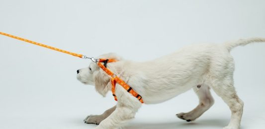 5 Simple Ways to Stop Your Dog from Pulling