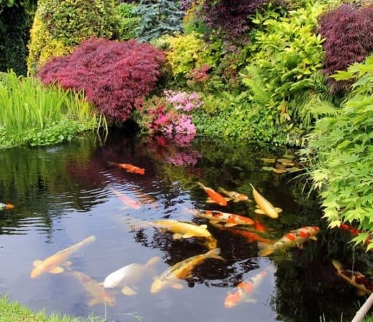 5 Ways to Incorporate a Pond into Your Garden