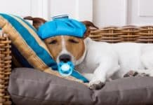 7 Ways to Comfort your Sick Dog