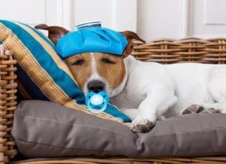 7 Ways to Comfort your Sick Dog
