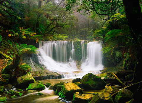 travel-like-a-local-top-secret-places-to-visit-in-australia-daintree -rainforest