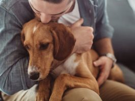 How to Help Your Dog Recover from Emotional Wounds
