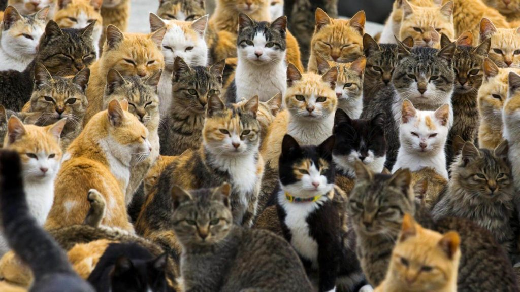 20 Weird Places around the World You Must Visit- Japan Cat Island