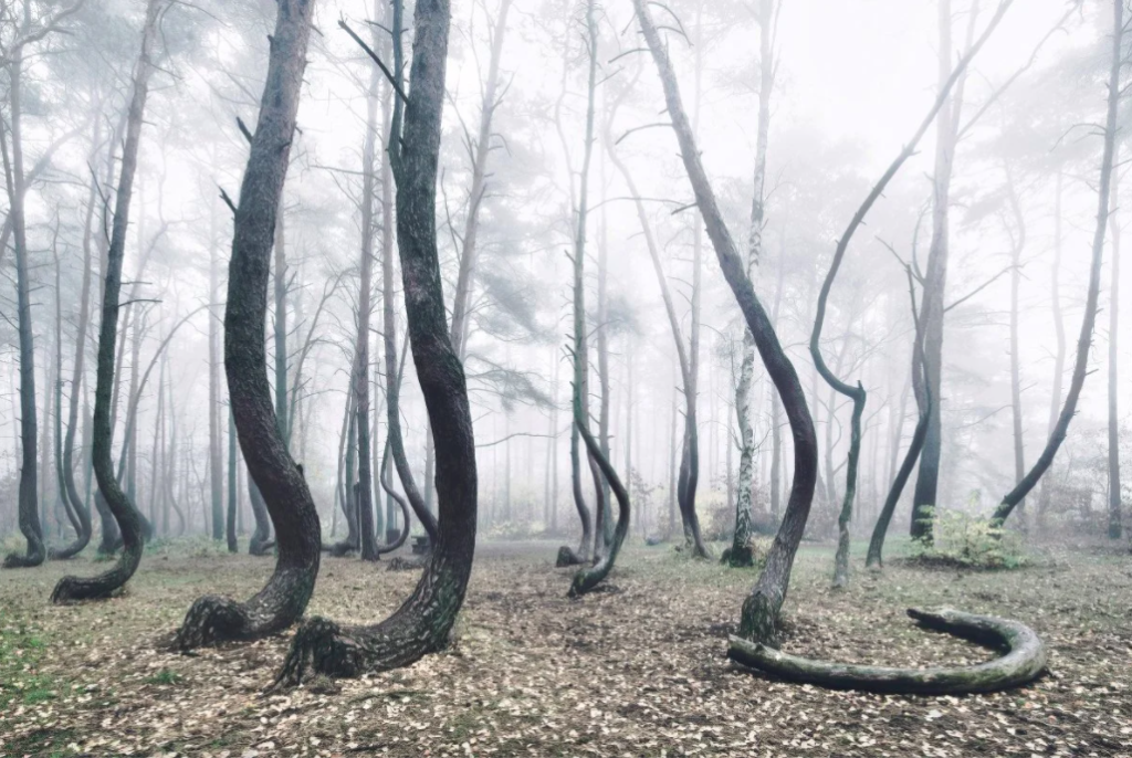 20 Weird Places around the World You Must Visit- Crooked Forest