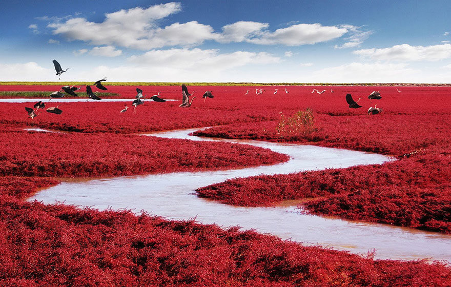 20 Weird Places around the World You Must Visit- Red Beach China