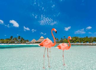 A Winter Aruba Vacation – A Dreamy Blend of Nature & Adventure!