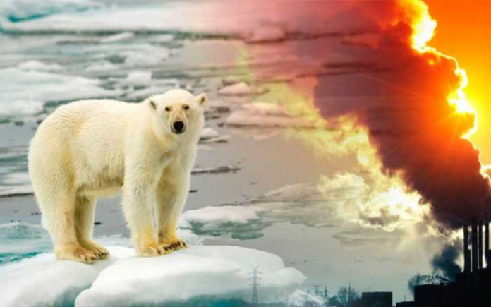What You Can Do To Stop Global Warming - Part 2