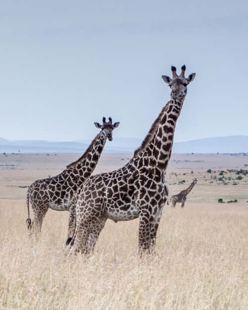 el Destinations You Should Visit in Kenya- Amboseli