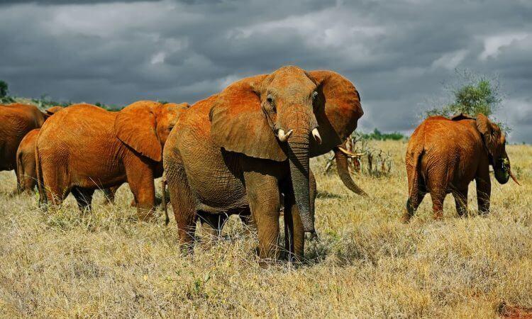 11 Spectacular Travel Destinations You Should Visit in Kenya- Tsavo