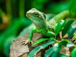 The Best Way to Take Care of Your Exotic Pets