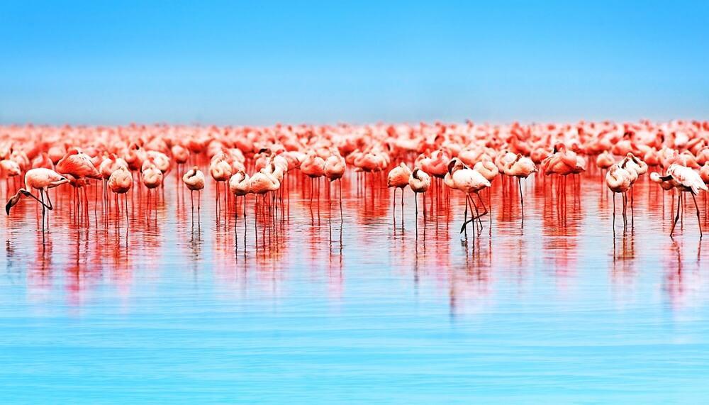 11 Spectacular Travel Destinations You Should Visit in Kenya- Lake Nakuru