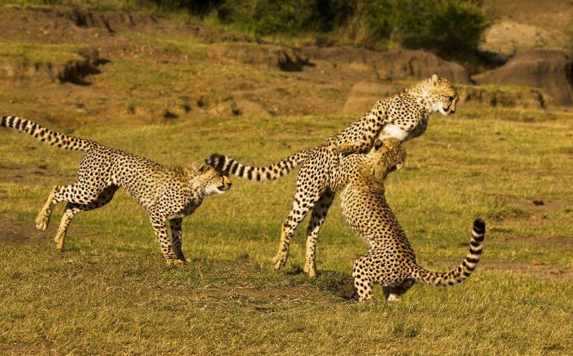 11 Spectacular Travel Destinations You Should Visit in Kenya- Masai Mara National Reserve