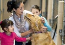 ow to Introduce Your Child to Rescue Dogs
